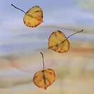 Floating Aspen Leaves by carolyndoe