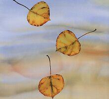 Floating Aspen Leaves by carolyndoe