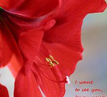 Amaryllis card by Eileen McVey