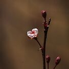 Spring . . . Finally !! by Renee Blake