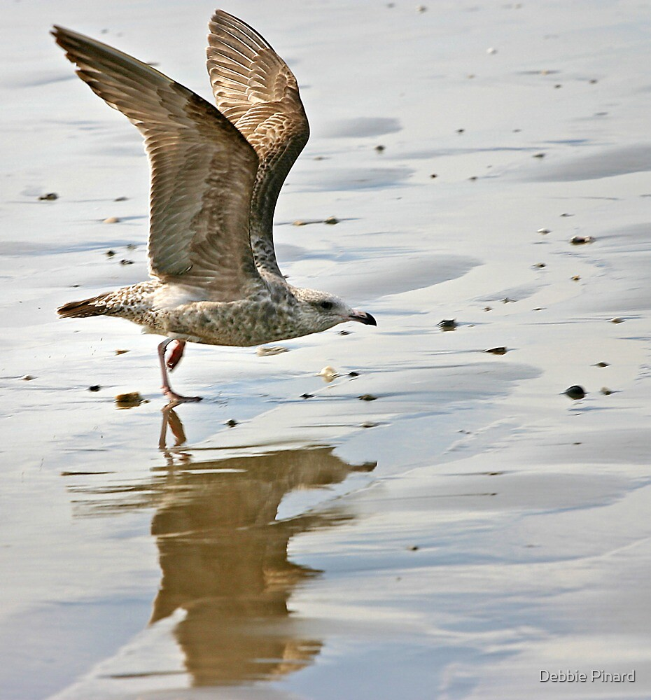 Coming in for a Landing - Texas by Debbie Pinard