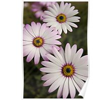 Daisy's Poster
