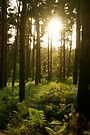Mystical Sunlight through Forest Trees by abinning