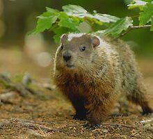 Groundhog Day, (okay, weekend) by gregsmith