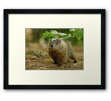 Groundhog Day, (okay, weekend) Framed Print