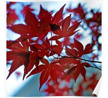 Red Leaves Backlit Poster