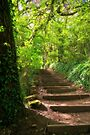 Steps – Tillicoultry Glen by abinning