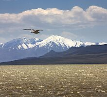 Spring Antelope Island by Bellavista2