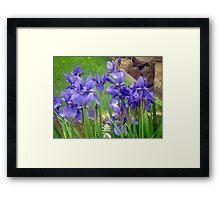 """""""Iris"""" Framed Print"""