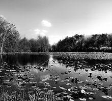 Lilypad Pond by Marcia Rubin