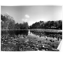 Lilypad Pond Poster