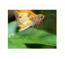 Moth On The Move Art Print