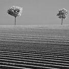 Trecon fields by Victor Pugatschew