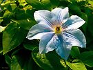 Clematis Blue by GardenJoy