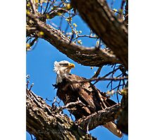 Mom Watches over the Nest Photographic Print
