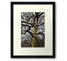 Young and graceful Framed Print