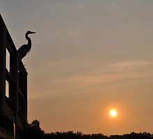 Silhouette of Heron  by Shelby  Stalnaker Bortone