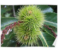 Chestnut blossom Poster