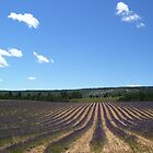 Lavender field in southern France by Andre090904