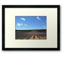 Lavender field in southern France Framed Print