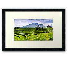 Field of Emerald Framed Print