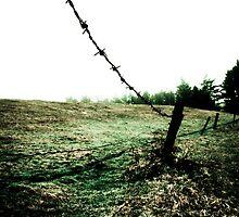 Clover Field by Nicole Remolde