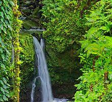 Rain Forest by barkeypf