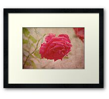 Even Roses Cry Framed Print