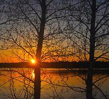 Sunset Through The Trees by Ljartdesigns