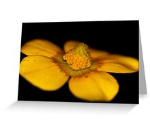 Ranunculus lappaceus  Greeting Card