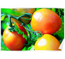 ORGANIC  TOMATOES Poster
