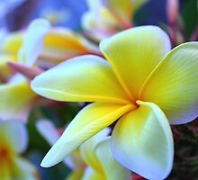 PLUMERIA IN THE SPRING by martycalabrese