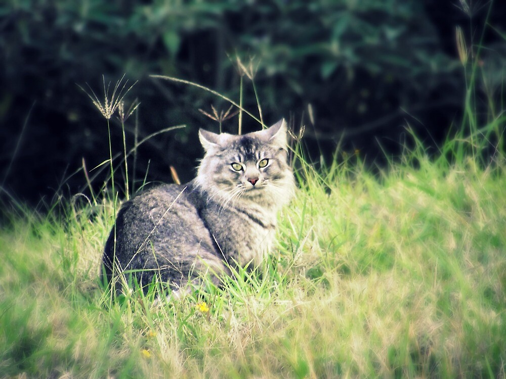 Wild and Free - 'Odie' the cat by Jennifer Rogers