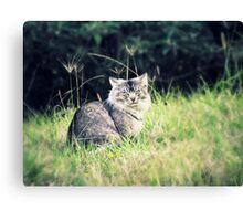 Wild and Free - 'Odie' the cat Canvas Print