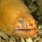Old Green Moray Eel - Gymnothorax prasinus by Andrew Trevor-Jones