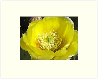 Cactus Bloom by Ann Warrenton