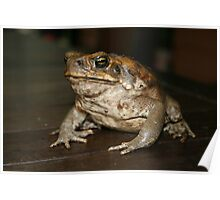 The Imported Cane Toad Poster