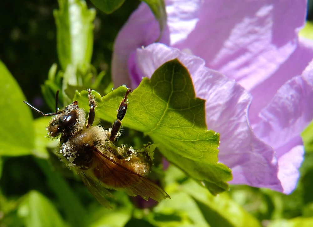 Another Flower...Another Load of Pollen by Meg Hart