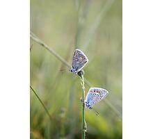 Double Blue Photographic Print
