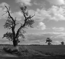 Three gnarled trees in Nowton by RKLazenby