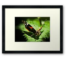 Red Admiral Face on Framed Print