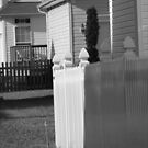 White Picket Fence by RKLazenby