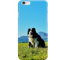 Teddy, Border Collie iPhone Case/Skin