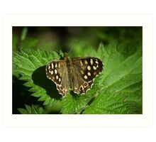 Spotted Wood Butterfly Art Print