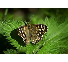 Spotted Wood Butterfly Photographic Print