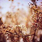 springtime II by Elizabeth Pellette