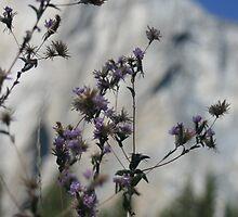 Yosemite by heidi-bee