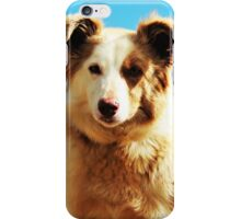 Pip, Border Collie iPhone Case/Skin