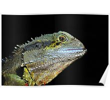""" Water Dragon Lizard  Marlo Vic. "" Poster"