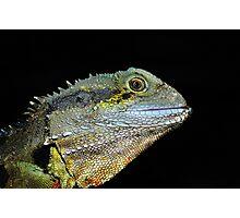 """ Water Dragon Lizard  Marlo Vic. "" Photographic Print"